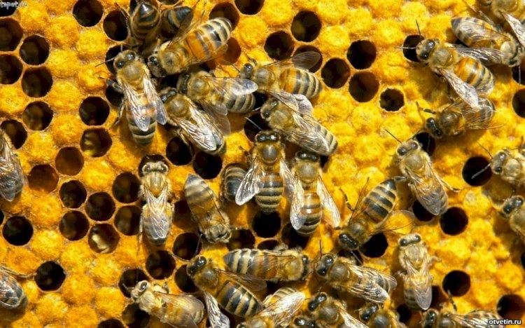 Arıcılar için Taşıma Ruhsatı